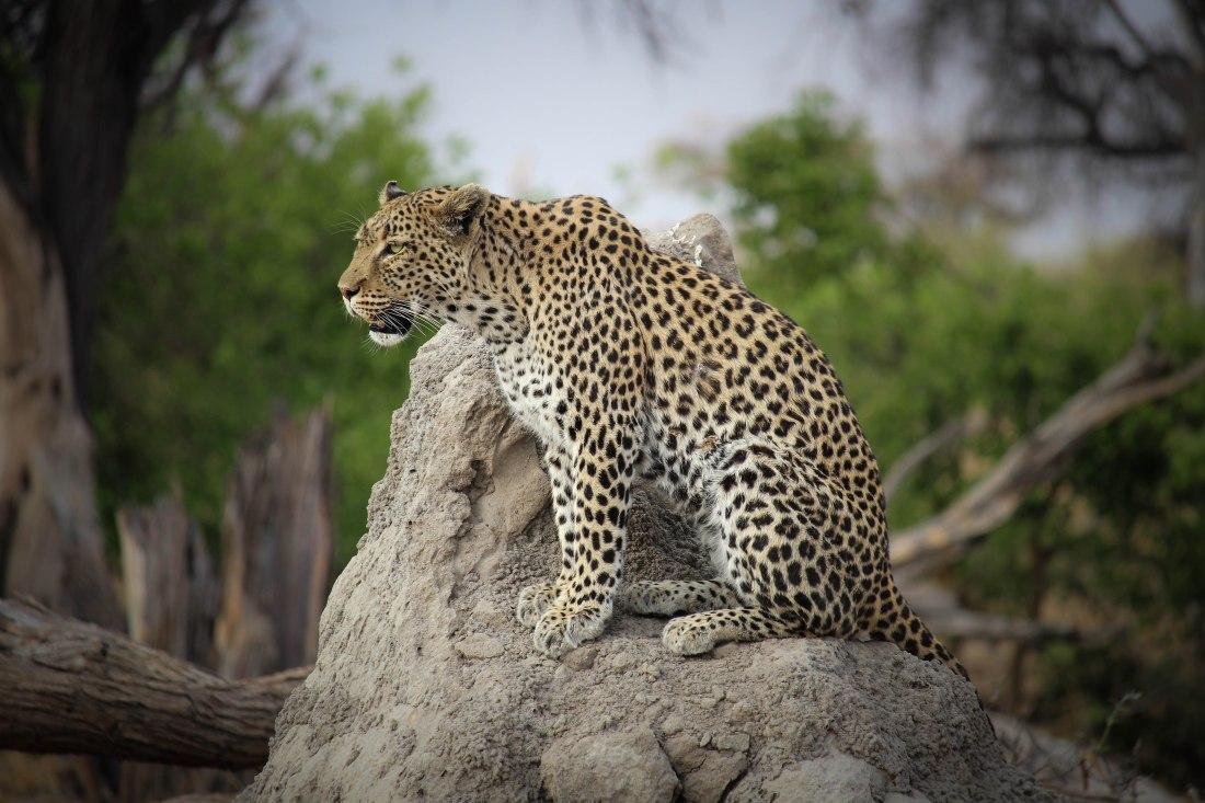9596-mamahota-south-africa-and-botswana-2016_pb-multimedia