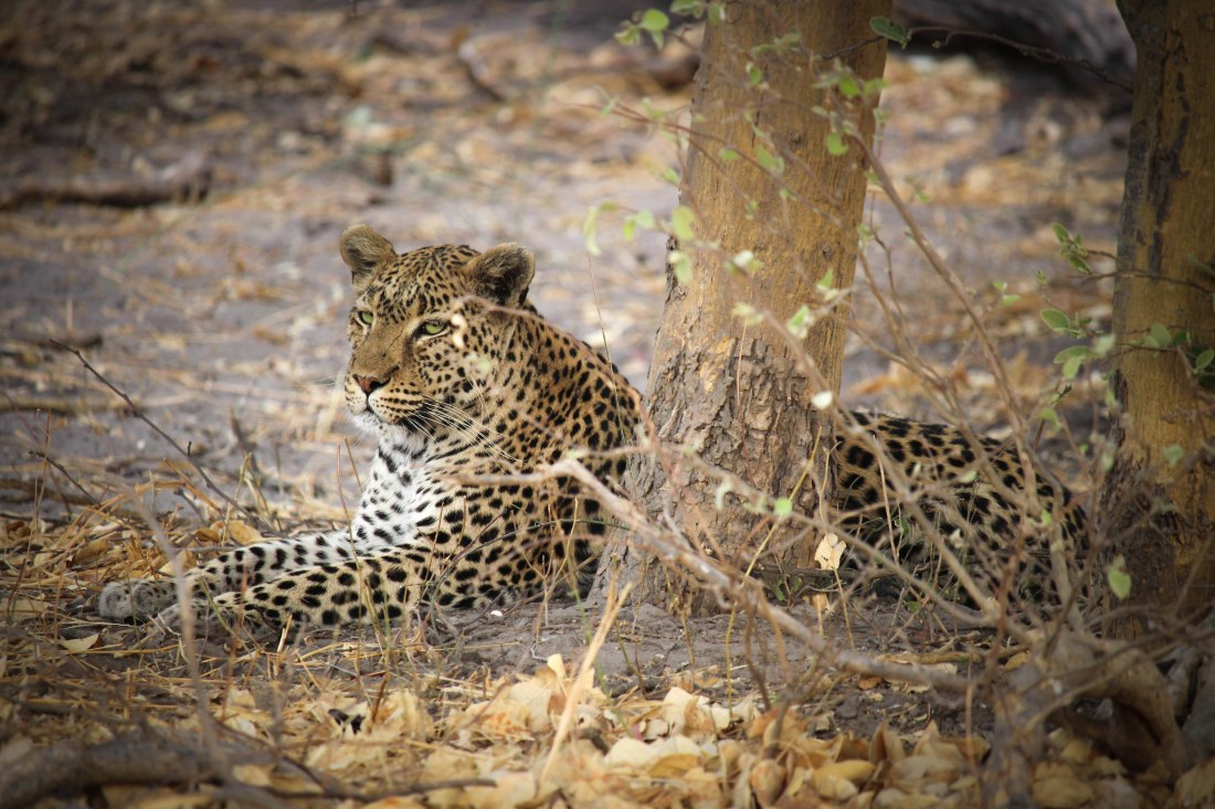 9618-mamahota-south-africa-and-botswana-2016_pb-multimedia